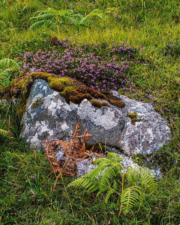 Eriboll,-Sutherland,-Scotland-8190001