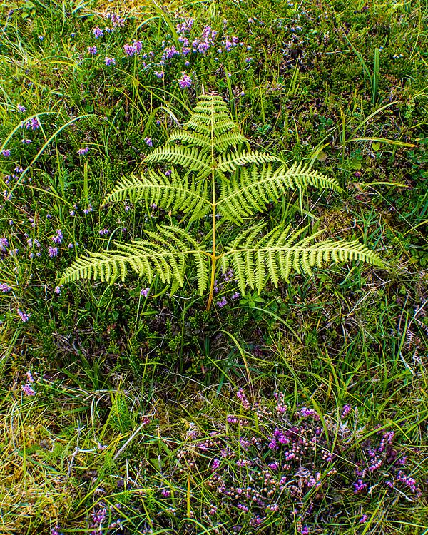 Eriboll,-Sutherland,-Scotland-8190005