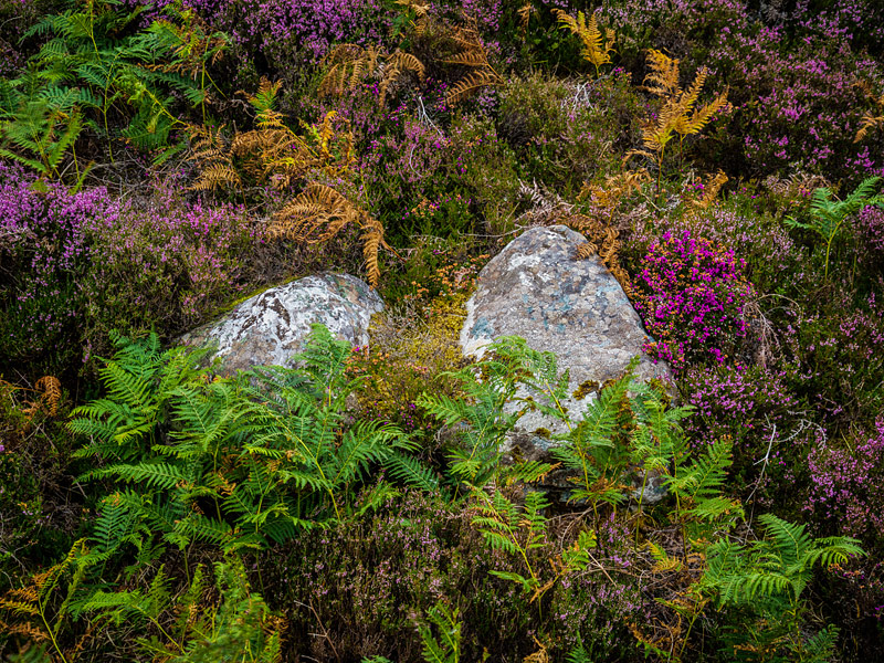 Loch-Eriboll-Vegitation,-Sutherland,-Scotland-0045