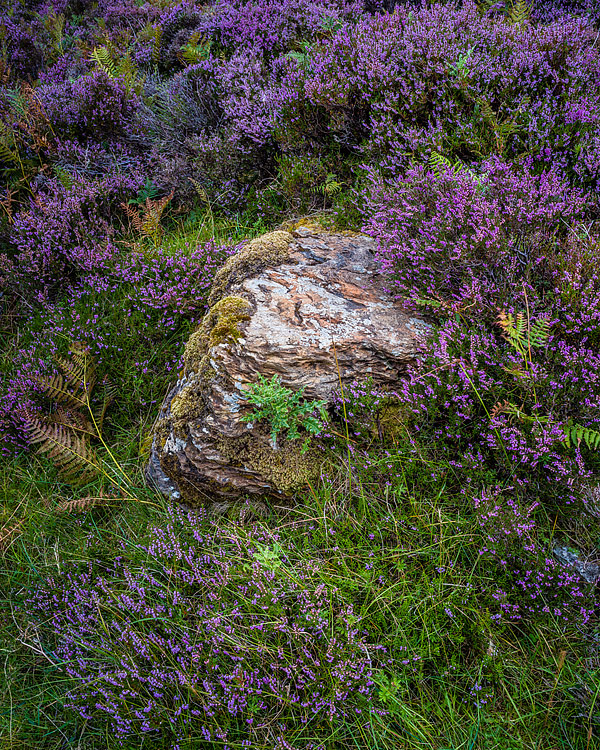 Loch-Eriboll-Vegitation,-Sutherland,-Scotland-1146