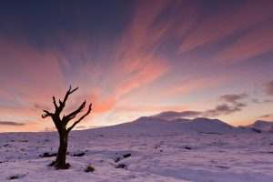 The lonely tree of Rannoch moor in Scotland