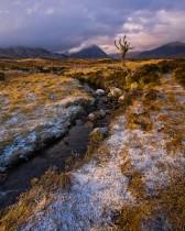 Iconic Tree Of Rannoch Moor, Scotland