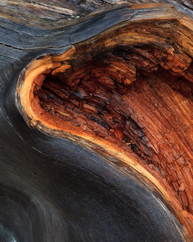 Patience and Persistence. Moraine-Lake-Wood-details-1764