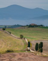 Cypress-at-Gladiator's-way,-Pienza,-Val-d'Orcia,-Tuscany,-italy-3899