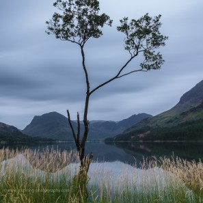 The-Early-Bird-Buttermere,-Lake-District,-England