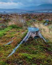 Tree Stubs of Rannoch Moor, Scotland Out of Chaos