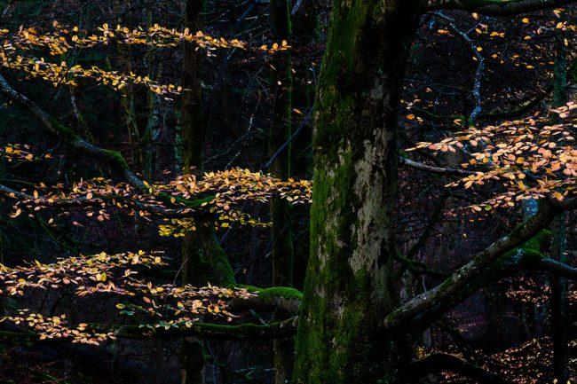 Visualising A Landscape Scene, Grasmere, Lake District