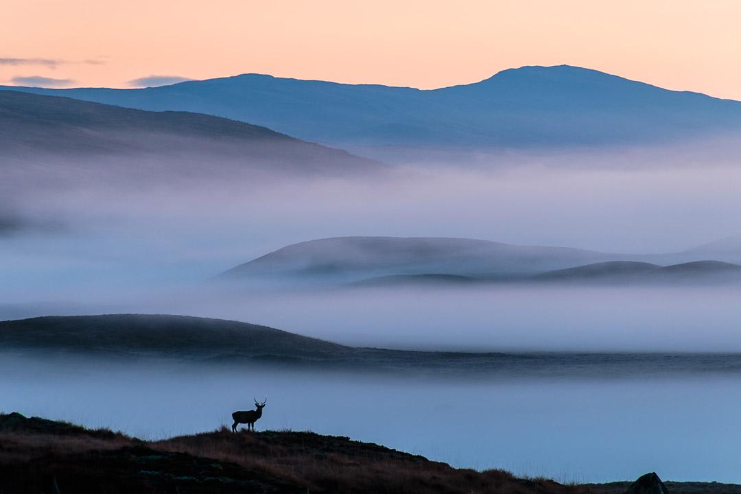 Sunrise At Rannoch Moor Scotland